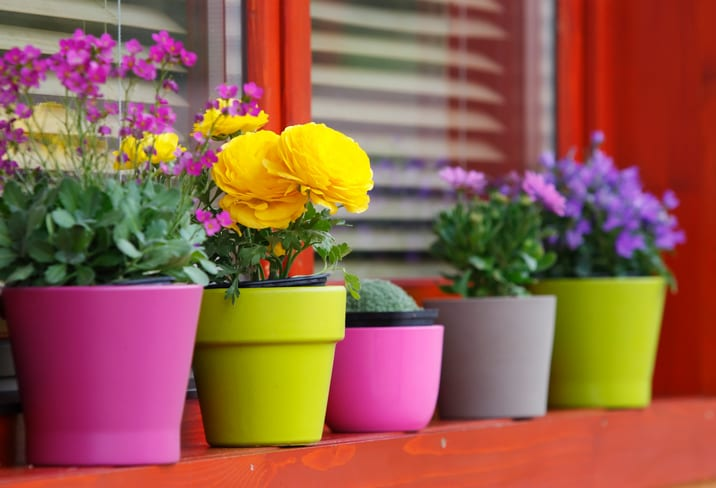 Colorful flowers in colored pots on a woodhouse balcony. Canon Eos 1D MarkIII.See similar photos: