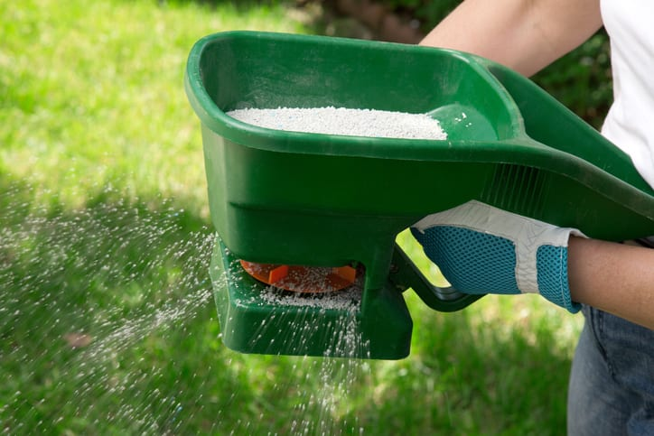 Manual fertilizing of the lawn in back yard in spring time