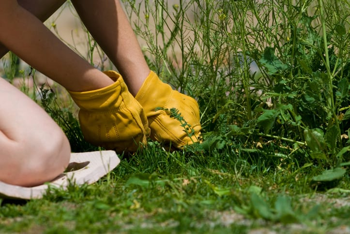 A young woman pulls large overgrown weeds http://www.duaneellison.com/istock_lb/yard_work.jpg